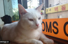 Tom's Cat Cafe: Purr-fect Afternoon in Hongdae