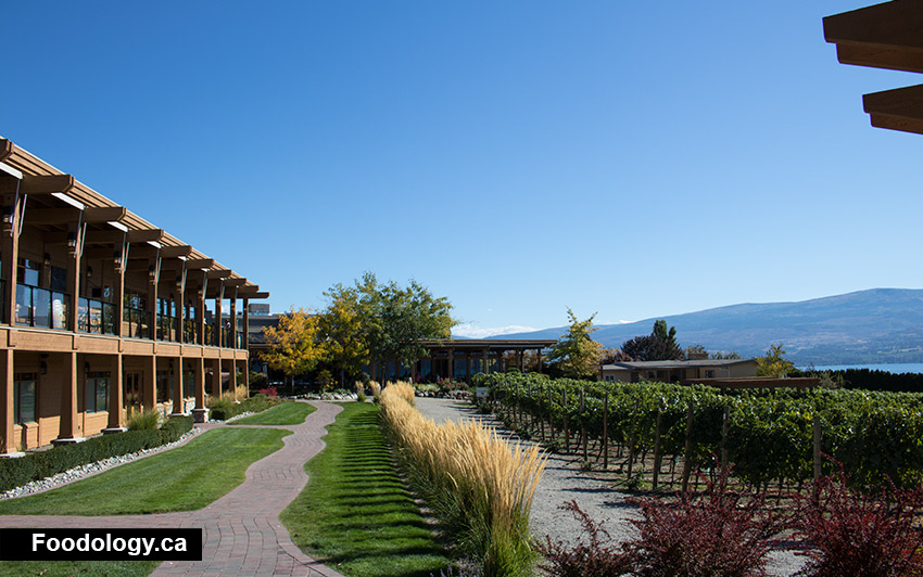 Quails Gate Winery Vineyard Tasting In Kelowna Foodology