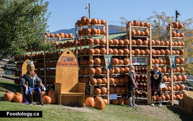 davidson-orchards-pumpkin-castle