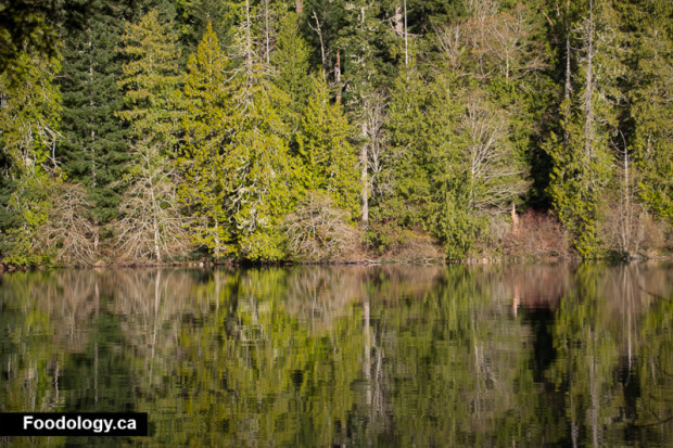 cathedral-grove-10