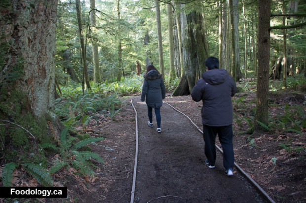 cathedral-grove-11