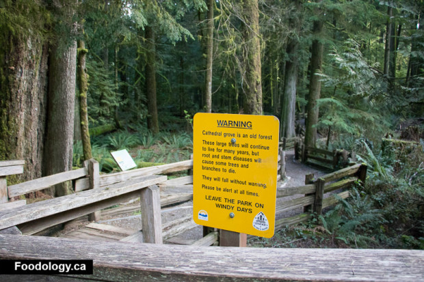 cathedral-grove-2