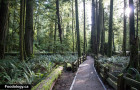 Cathedral Grove: Old Growth Forest on Vancouver Island