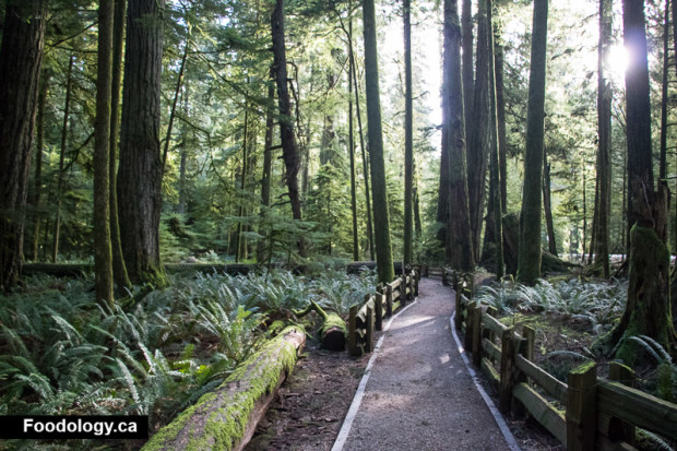 cathedral-grove-4