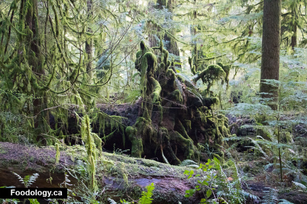 cathedral-grove-5