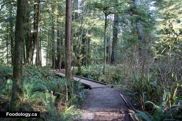 cathedral-grove-6