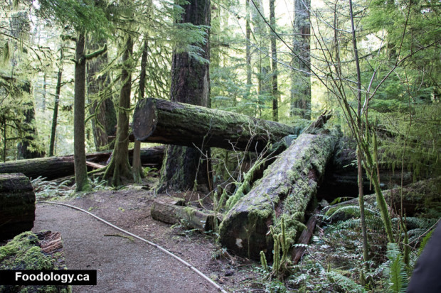 cathedral-grove-7