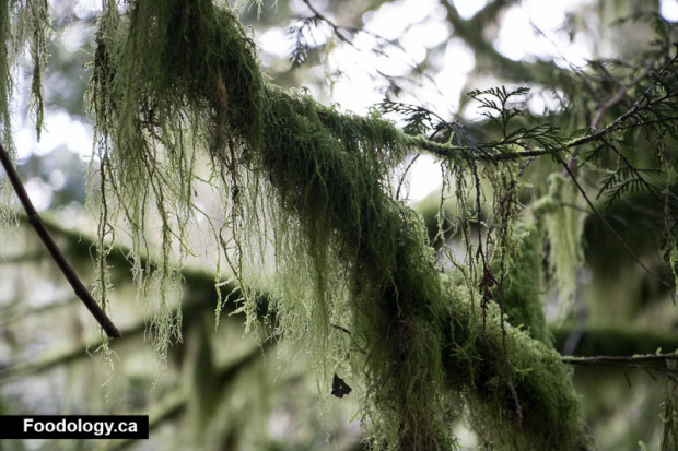 cathedral-grove-8
