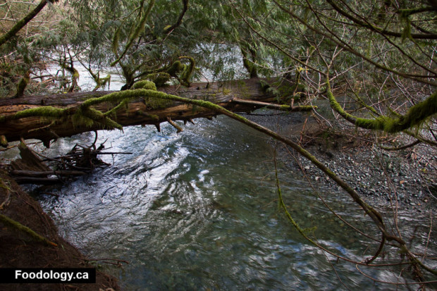 cathedral-grove-9