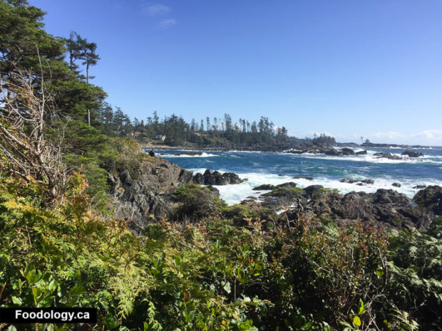 ucluelet-big-beach-black-rock-1