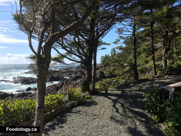 ucluelet-big-beach-black-rock-2
