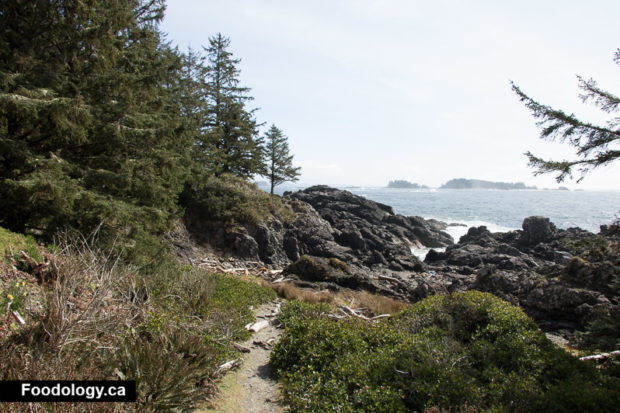 ucluelet-wild-pacific-trail-1