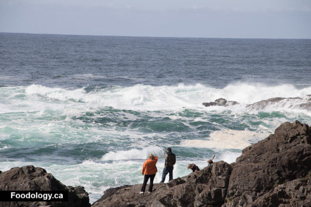 ucluelet-wild-pacific-trail-4