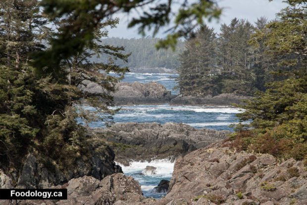 ucluelet-wild-pacific-trail-6