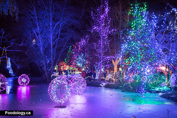 Lot Of Families Were Visiting Before Christmas To Get A View Of The Garden  All Covered In Lights.